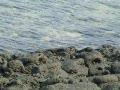 長崎県富江のサイクリングロード