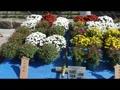 明石の子どもたちの鉢植え作品